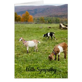 Vermont Goats Sympathy Card