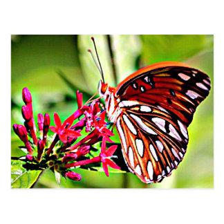Vermont Monarch Butterfly Postcard