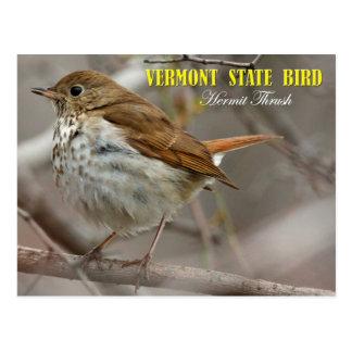 Vermont State Bird: Hermit Thrush Postcards