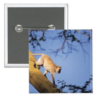 Vervet monkey on tree branch , Serengeti 15 Cm Square Badge