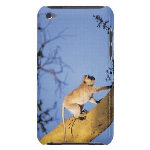 Vervet monkey on tree branch , Serengeti Case-Mate iPod Touch Case