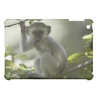 Vervet Monkey, Zimbabwe Case For The iPad Mini