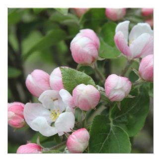 Very beautiful spring summer pink apple flowers custom announcement