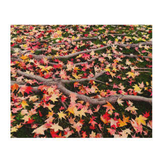 Very Colorful Maple Leaves Wood Print