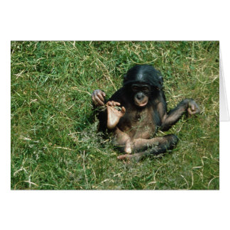 Very Cute Baby Bonobo Ape Greeting Card