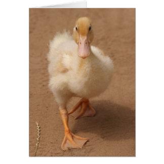 Very Cute Duckling Card