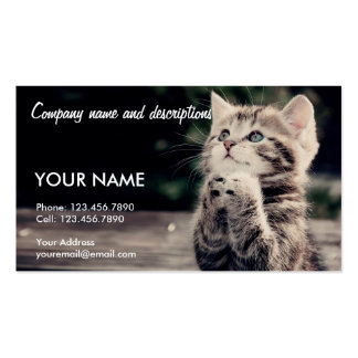 Very Cute Praying Cat Pack Of Standard Business Cards