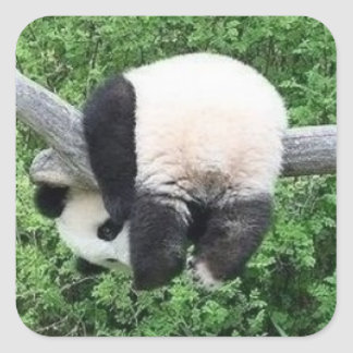very funny panda square sticker