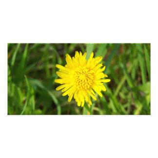 Very Pretty Dandelion Photo Greeting Card