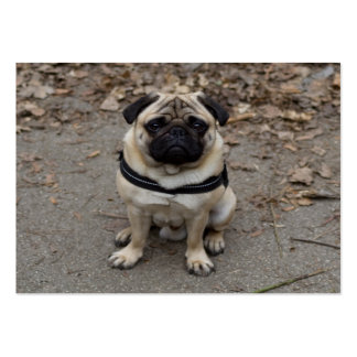 Very Serious Pug Pack Of Chubby Business Cards