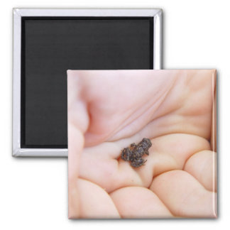 Very Tiny Black Frog About Size Of Fly In The Hand Fridge Magnets