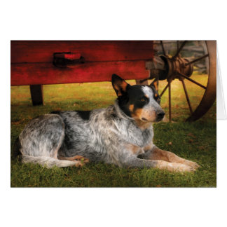 Veterinarian - Dog - Always Faithful (healer) Greeting Card