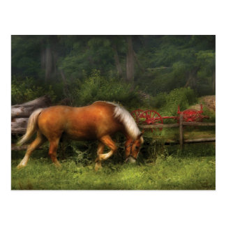 Veterinarian - In the Meadow Postcard