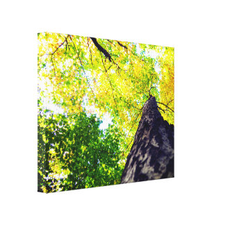 Vibrant and Bright Nature Canvas Print
