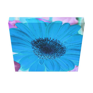 Vibrant Baby Blue Gerber Daisy. Canvas Print