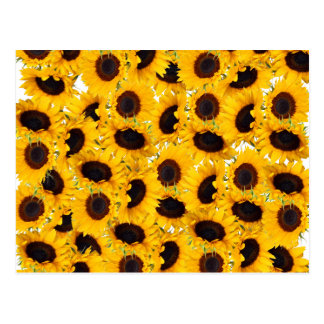 Vibrant Beautiful Sunflowers Nature Floral Pattern Postcard