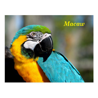 Vibrant Color Macaw Postcard