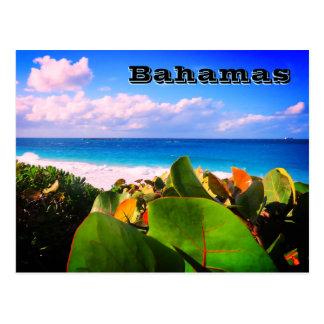 Vibrant Custom Tropical Destination Postcard