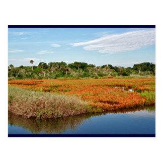 Vibrant Fall Marsh, Florida Postcard