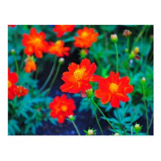 Vibrant flowers post card