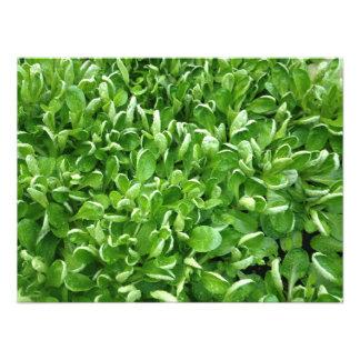 Vibrant Green Mache Photo Print