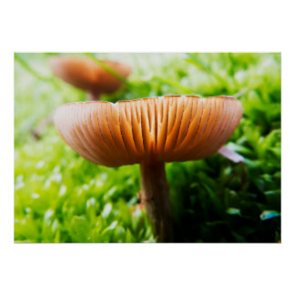 Vibrant Mushroom On The Ground Poster
