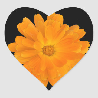 Vibrant Orange Dahlia Flower Sticker
