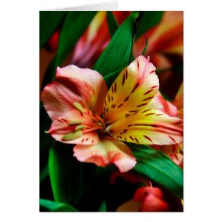 Vibrant Orange Tiger Lily Card