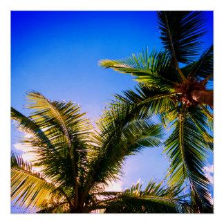Vibrant Palm Trees