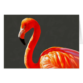 Vibrant Pink Flamingo Card