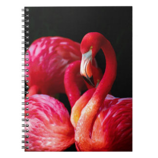 Vibrant Pink Flamingos and Black Background Notebook