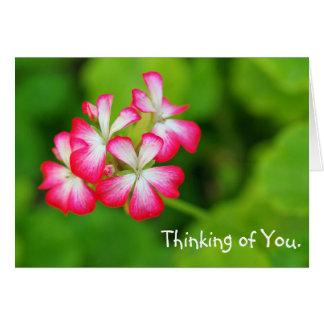 Vibrant Pink Geraniums | Greeting Card