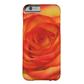 Vibrant Red and Peach Rose Macro Photo Barely There iPhone 6 Case
