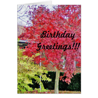 Vibrant Red Fall Tree Greeting Card
