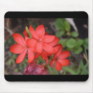 Vibrant Red Flower Mouse Pad