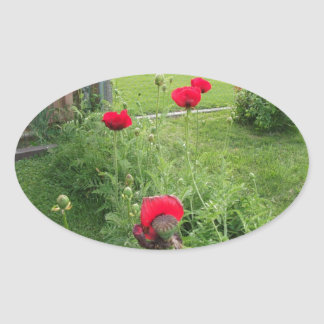 Vibrant Red Poppies Oval Sticker