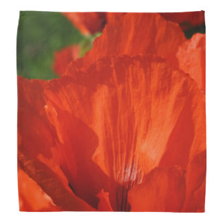 Vibrant Red Poppy Bandanna