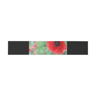 Vibrant Red Poppy belly band Invitation Belly Band