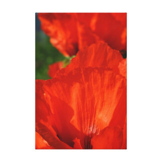 Vibrant Red Poppy Gallery Wrapped Canvas