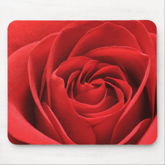 Vibrant Red Rose Blossom Mouse Pad