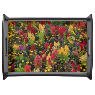 Vibrant Summer Flower Garden in Orlando Florida Food Tray