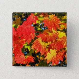 Vibrant vine maple in fall 2 Inch Square Button