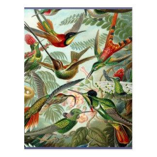 Vibrant Vintage hummingbirds art exotic tropical Postcard