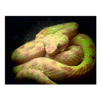 Vibrant Yellow Viper Postcard
