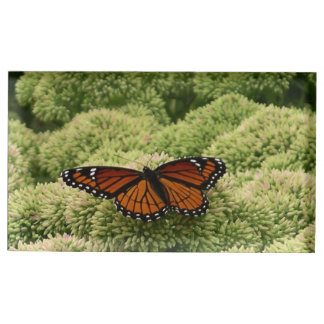 Viceroy Butterfly Beautiful Nature Photography Table Card Holder