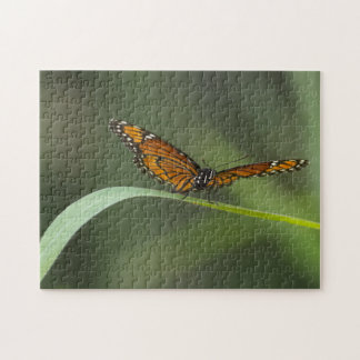 Viceroy Butterfly Jigsaw Puzzle