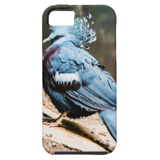 Victoria Crested Pigeon iPhone 5 Cases
