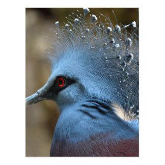 Victoria Crowned Pigeon Postcard