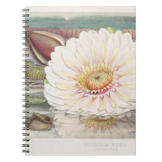 Victoria Regia Vintage illustration notebook