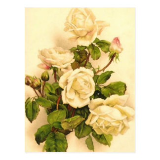 Victorian Ivory Rose Painting Postcard